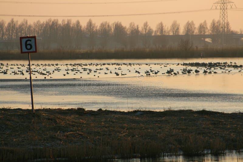 Vogels in het water royalty-vrije stock foto's