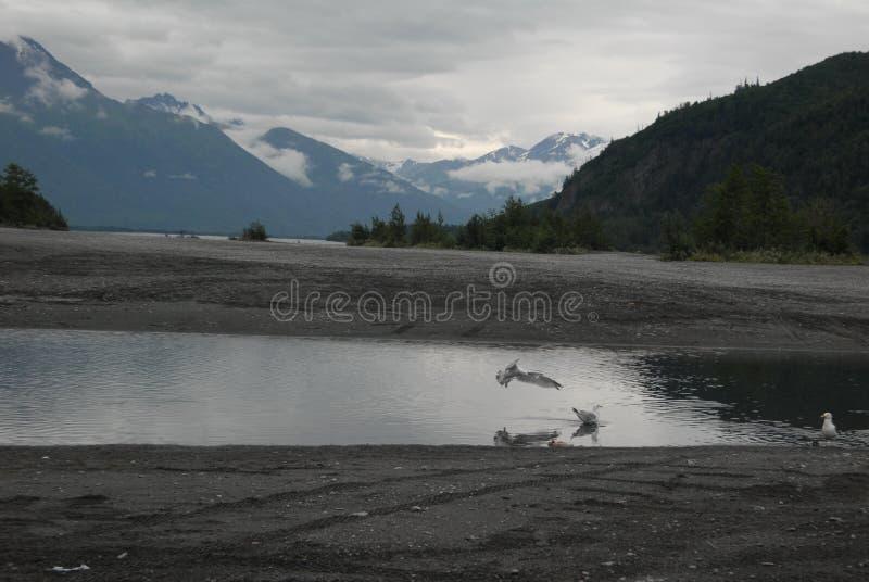 Vogels ijzig drinken vloeit weg stock foto