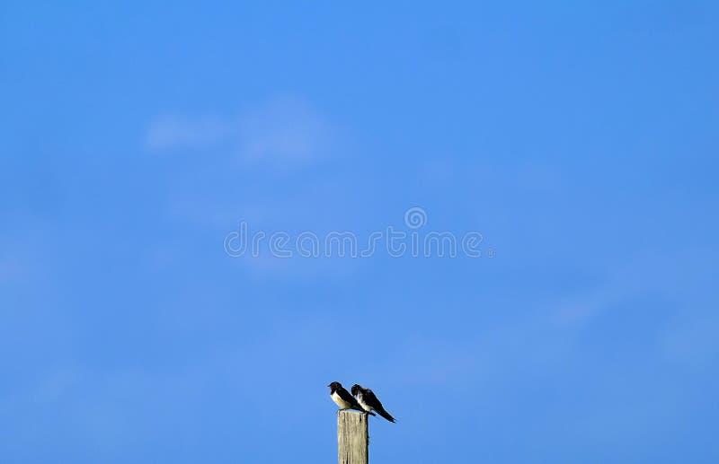 vogels met de blauwe hemel stock foto's