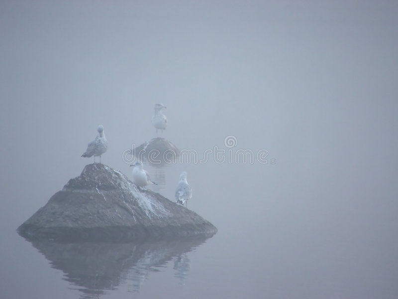 Vogels in Mist I royalty-vrije stock foto's