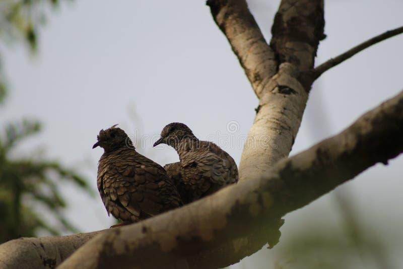 Vogels op boom stock afbeelding