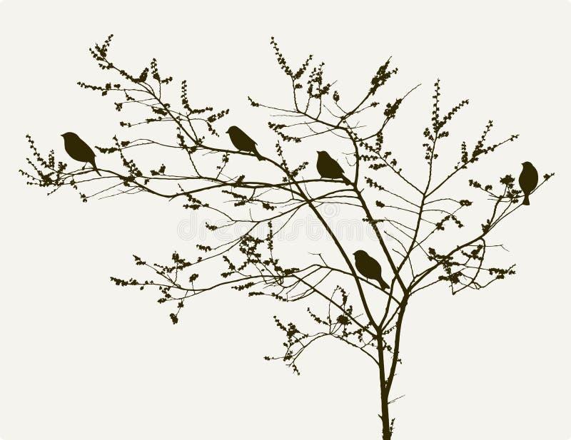 Vogels op de de lenteboom