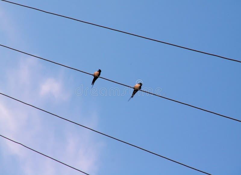 Vogels op de draad stock afbeelding