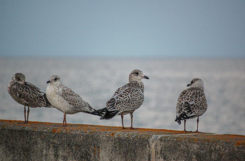 Vogels op de muur stock afbeelding