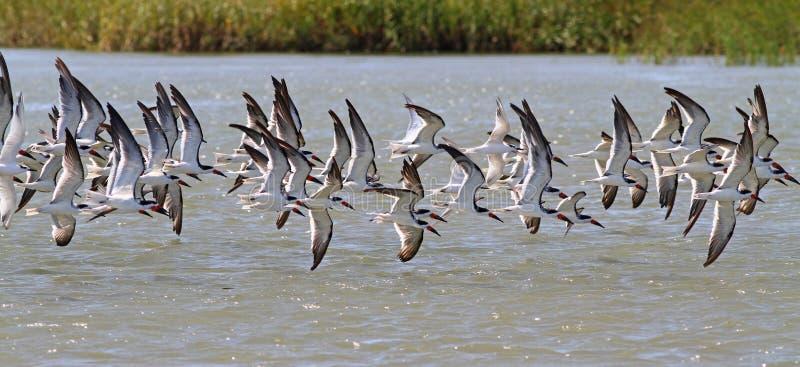 Vogels op de Vleugel stock fotografie