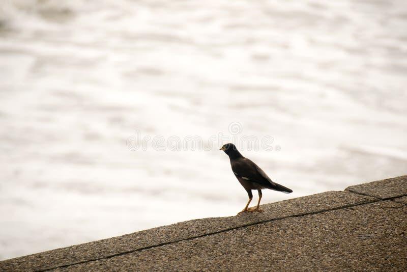 Vogels op de watermuur en het wateroverzees stock foto
