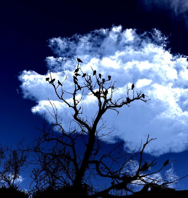 Vogels op een Boom met Achtergrond 5 van de Hemel stock afbeeldingen
