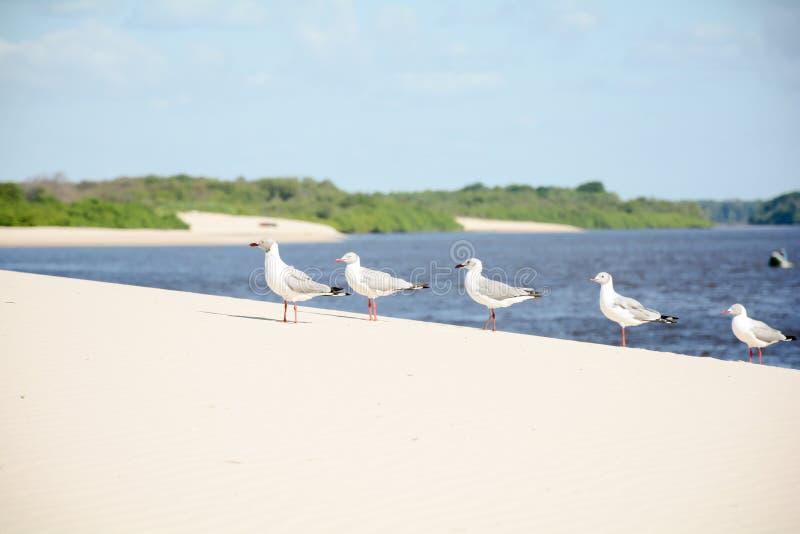 Vogels op een zandduin royalty-vrije stock afbeelding