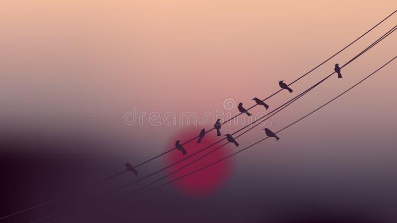 Vogels op kabeldraden met mooie schemeringzonsondergang vector illustratie