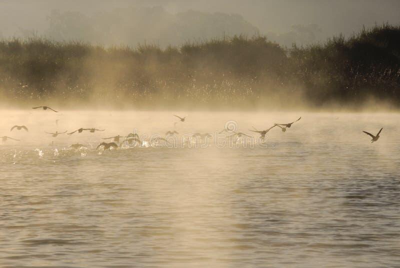 Vogels op meer royalty-vrije stock foto