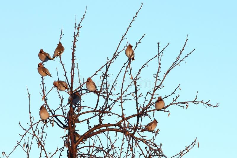 Download Vogels op naakte boom stock afbeelding. Afbeelding bestaande uit life - 107701703