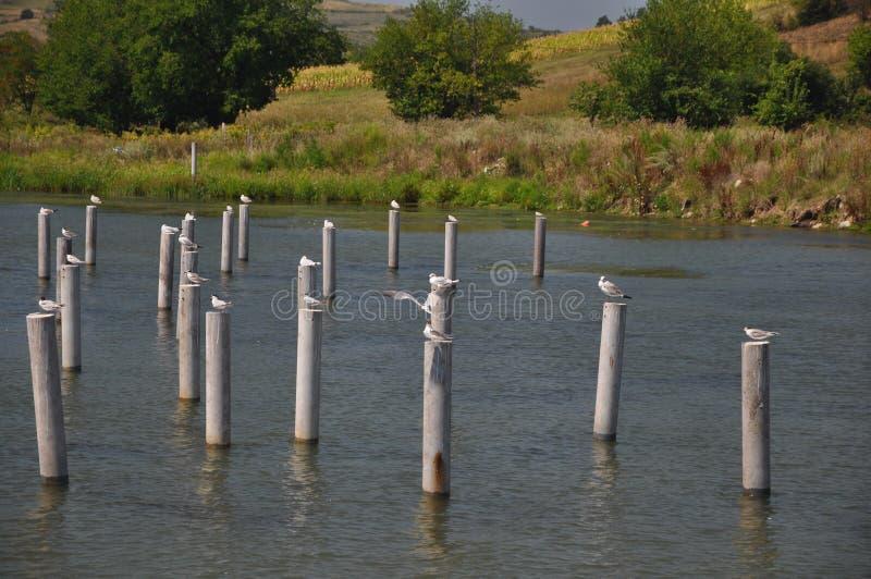 Vogels op Pylonen royalty-vrije stock afbeeldingen