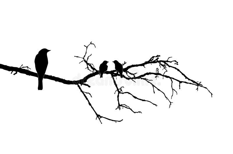 Vogels op tak vector illustratie