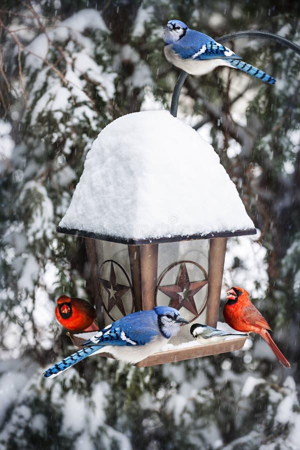 Vogels op vogelvoeder in de winter stock foto's