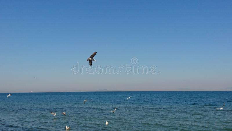 Vogels over blauw overzees yalovastrand royalty-vrije stock foto's