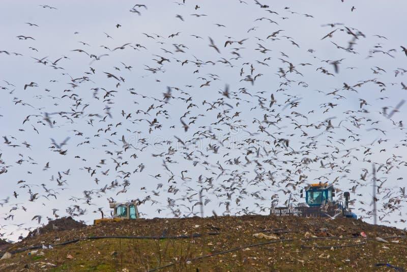 Vogels over een Stortplaats royalty-vrije stock foto's