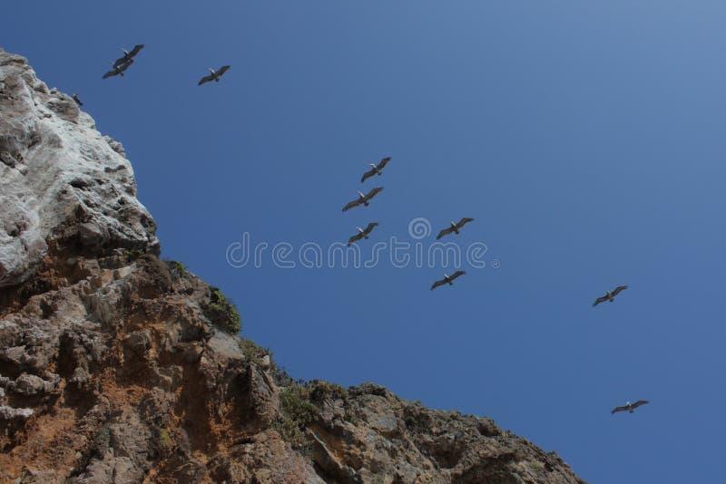 Vogels Slying boven Klippen royalty-vrije stock fotografie