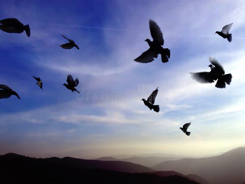 Vogels tijdens de vlucht stock foto's