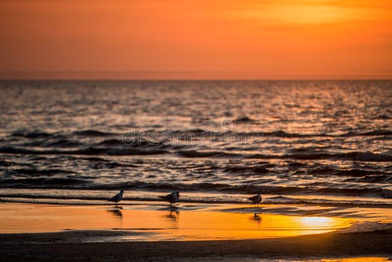 Vogels tijdens oranje zonsondergang dichtbij oceaan royalty-vrije stock fotografie