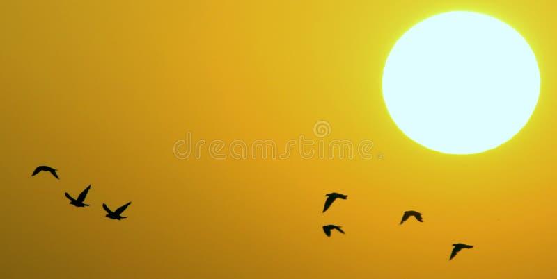 Vogels tijdens zonsondergang royalty-vrije stock foto's