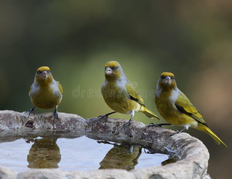 Vogels van Afrika royalty-vrije stock afbeeldingen