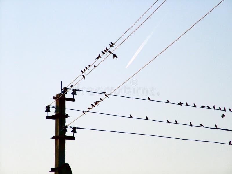 Vogels van een draad en het vliegende vliegtuig stock afbeelding