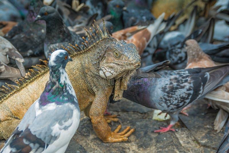 Vogels van een Troep van de Veer samen stock afbeeldingen