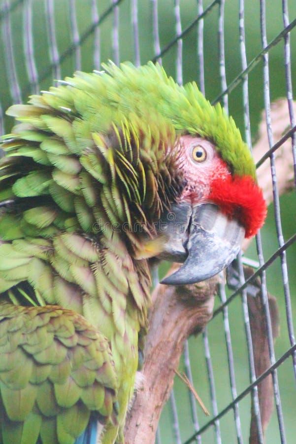 Vogels van een veerstok samen royalty-vrije stock fotografie