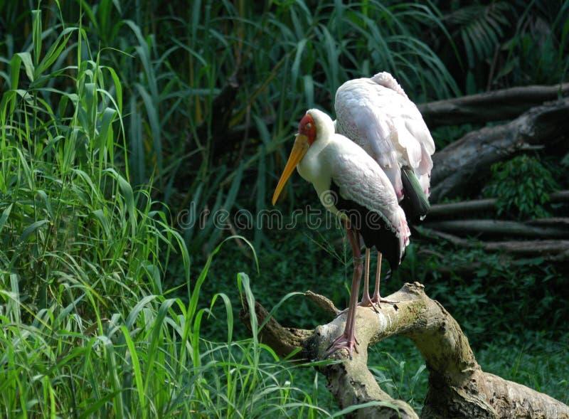Vogels van onze wereld royalty-vrije stock fotografie