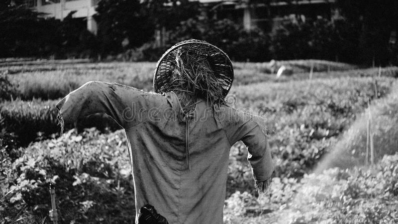 Vogelscheuche auf Schwarzem u. weißem stockfotografie