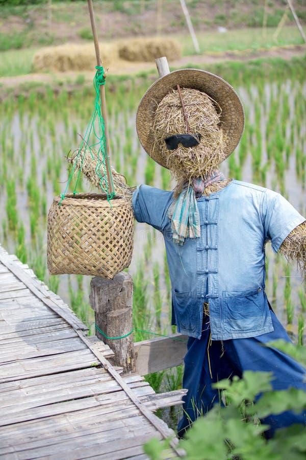 Vogelscheuche im Reisbauernhof an der Landschaft in Thailamd stockbild
