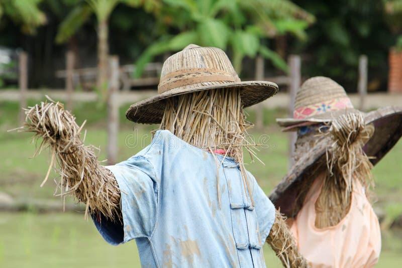 Vogelscheuche im Reisbauernhof stockbilder