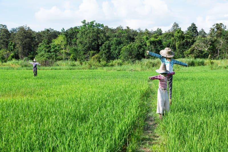 Vogelscheuchen, die am grünen Reisfeld mit Wald- und des blauen Himmelshintergrund stehen lizenzfreies stockfoto
