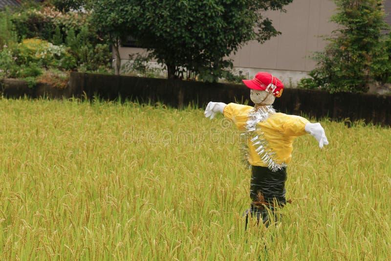 Vogelscheuchen, die am grünen Reisfeld stehen Vogelscheuche ländliches landsca stockfotografie