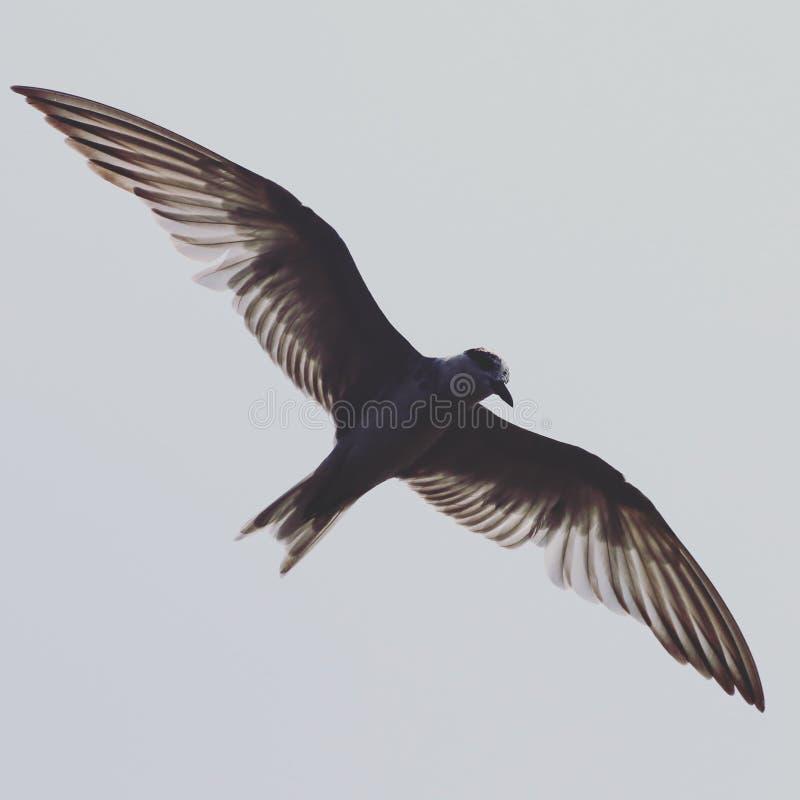 Vogelseemöweflügel lizenzfreie stockfotos