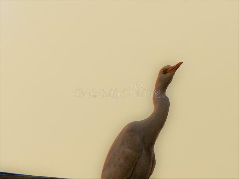 Vogelsgalerij royalty-vrije stock foto's