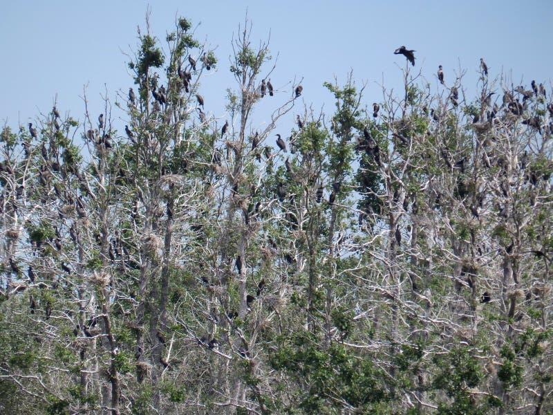 Vogelsilhouet met boom stock foto's