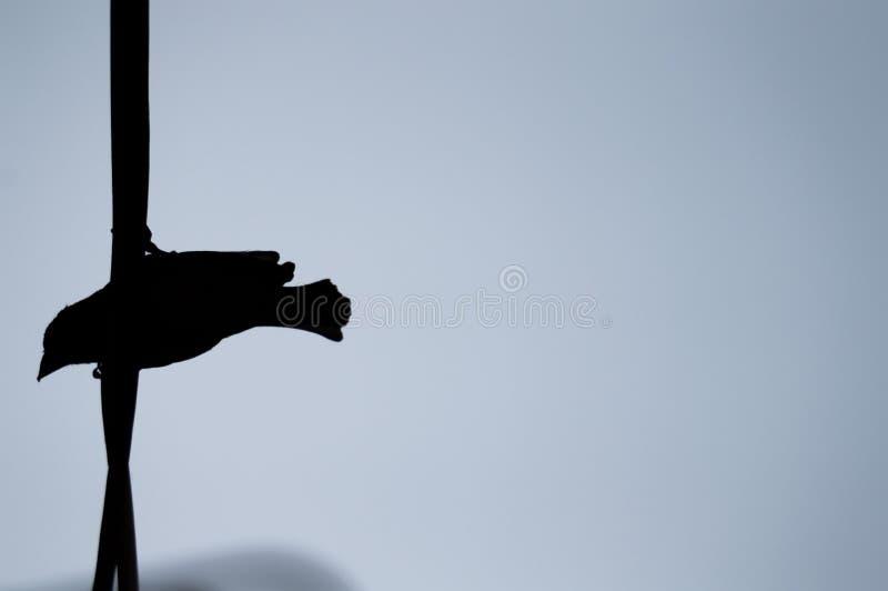 Vogelsilhouet op draad tegen blauwe hemel stock afbeelding