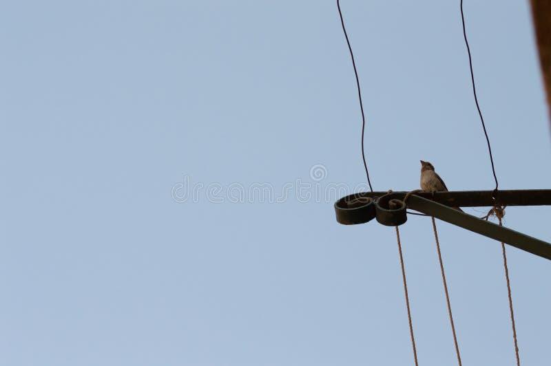 Vogelsilhouet op draad tegen blauwe hemel royalty-vrije stock fotografie