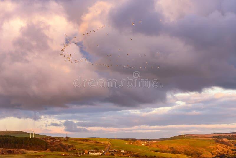 Vogelsmigratie Lancashire het UK royalty-vrije stock afbeelding