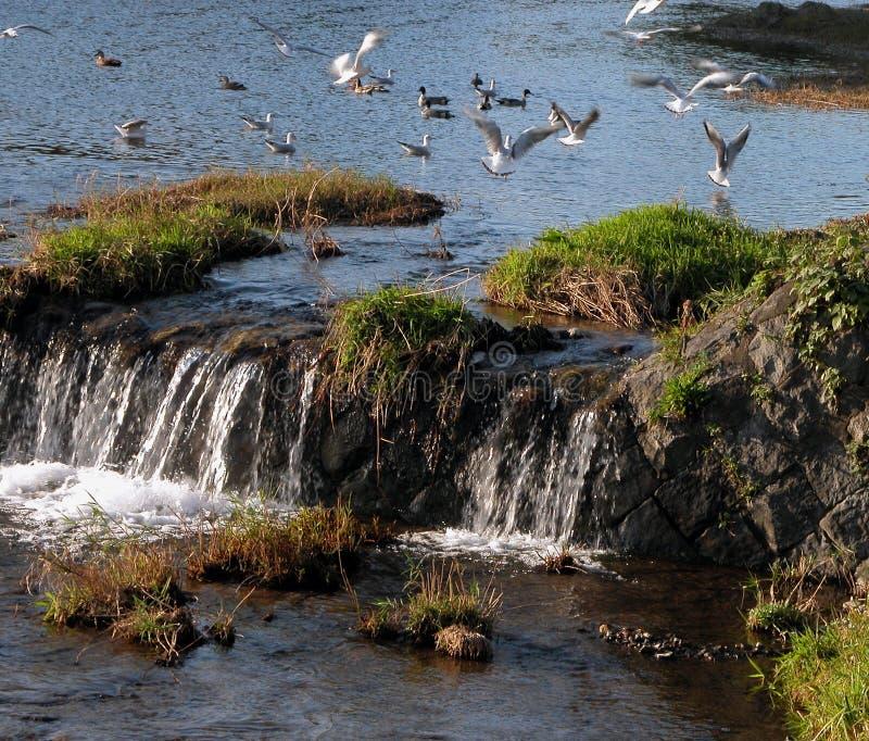 Download Vogelspiel stockfoto. Bild von platz, ablage, vogel, bild - 41000