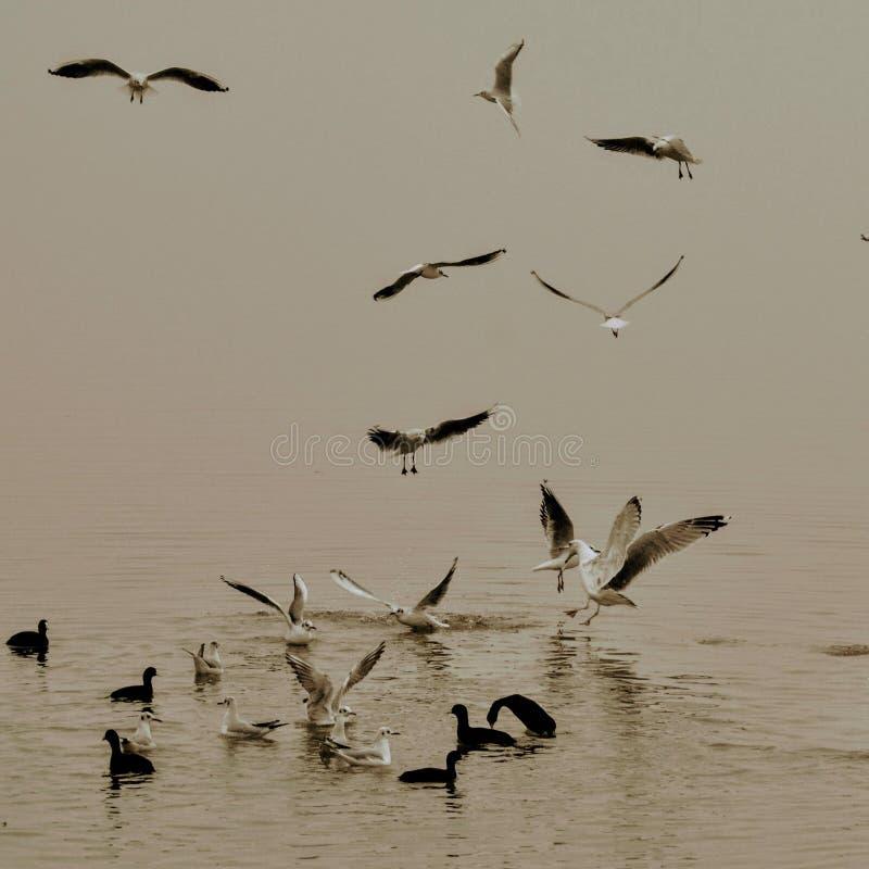 Vogelspiel stockbilder