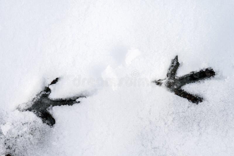 Vogelsporen op sneeuw royalty-vrije stock foto