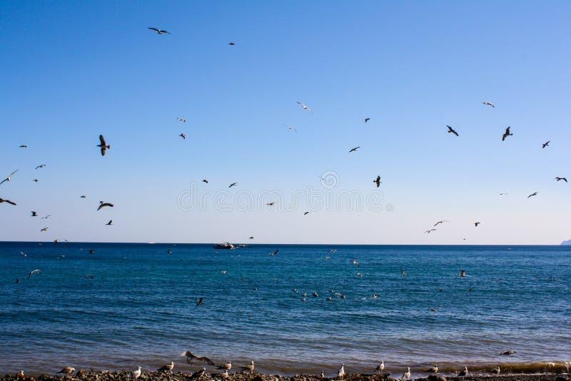 Vogelsvlieg door het overzees royalty-vrije stock afbeeldingen