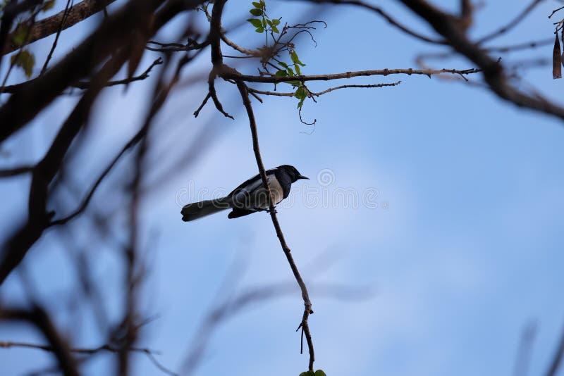 Vogeltakken stock fotografie