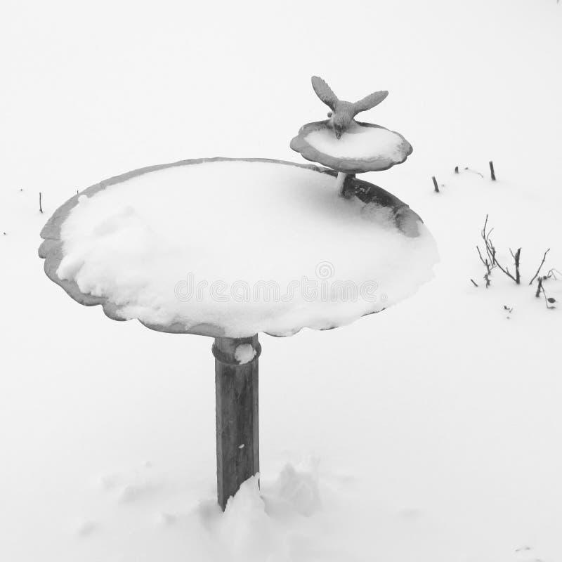 Vogeltränke im Winter stockbilder
