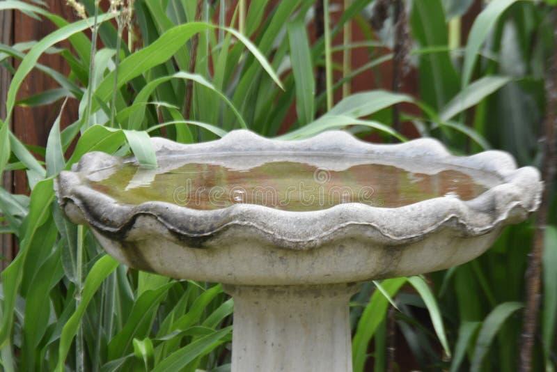 Vogeltränke umgeben durch kleine cornstalks 1 lizenzfreie stockfotografie
