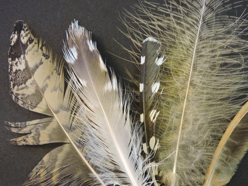 Vogelveren stock afbeeldingen