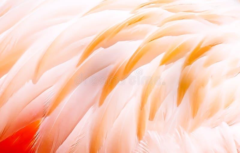 Vogelverencollage Foto's met grafisch effect royalty-vrije stock afbeelding
