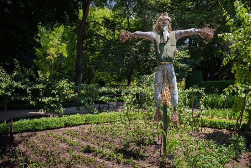 Vogelverschrikkerstrawman die installaties en groenten in een tuin beschermen stock afbeelding